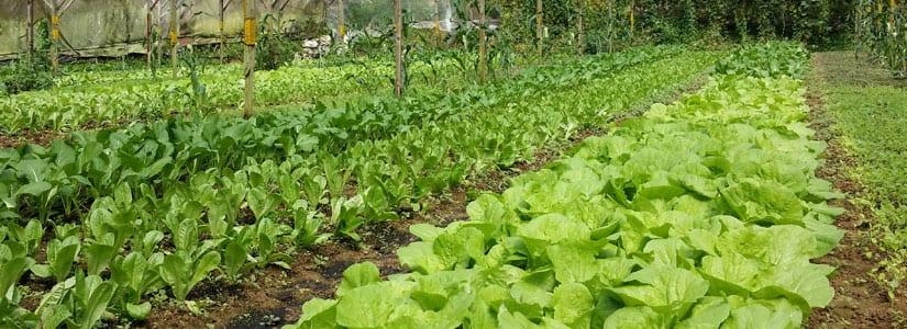 banner-certified-farm