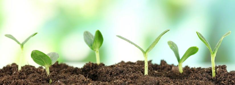 banner-organic-farming